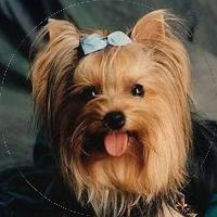 DOG in MARSEILLE (Groupement Cynophile Marseillais)